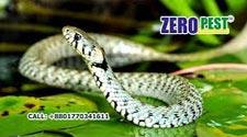 Snake Control Service