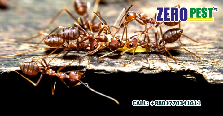 Ants Control Service